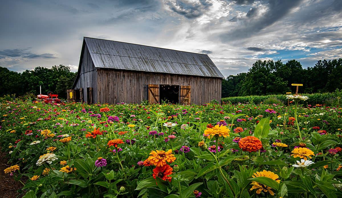 2021 Goldpetal Farms Photo Contest Winner Carl Mayford