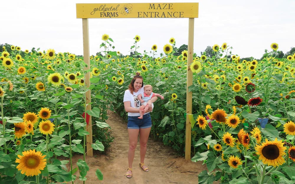 Goldpetal Farms Sunflower Maze Southern Maryland